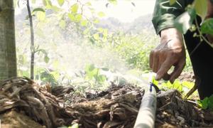 Nông dân chế hệ thống tưới nước cho đồi na trăm ha