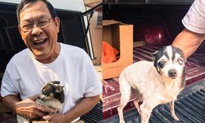Chú chó cào cửa cứu chủ Việt khỏi chết cháy ở California
