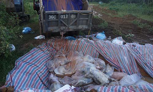 Thanh Hóa tiêu huỷ xong gần 6.000 con lợn chết ngập trong lũ