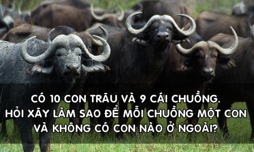 lam-sao-nhot-10-con-trau-vao-9-chuong-moi-chuong-mot-con
