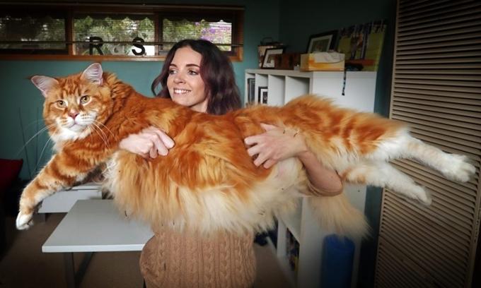 Những kỷ lục gia trong thế giới chó mèo