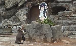 Chim cánh cụt 'tương tư' mỹ nhân hoạt hình Nhật qua đời