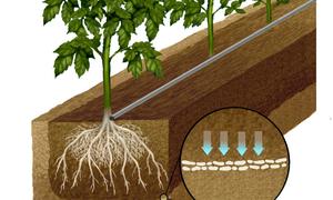 Nông dân đầu tư hệ thống nước tưới ngầm cho 170ha cam