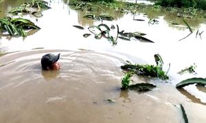 Nhiều vườn thanh long Bình Thuận bị lũ nhấn chìm