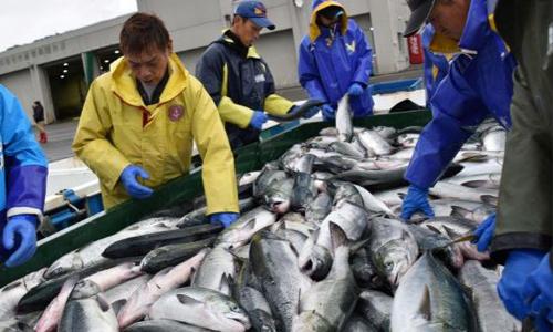 Ngư dân làm việc tại cảng ở Erimo ngày 12/10. Ảnh: Reuters.