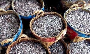 Muối cá cơm làm nước mắm Phan Thiết