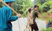 Đội quân đập chết chó thả rông ở Hà Nội gây tranh cãi