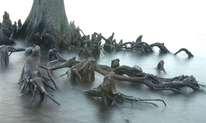 Những loài cây có hình dáng gây sợ hãi