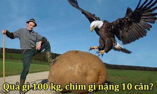 loai-chim-nao-nang-10-can-qua-gi-co-trong-luong-100-kg