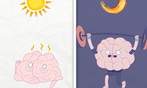 Não bộ hoạt động tốt nhất ở thời điểm nào?