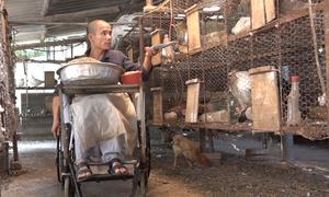 Chàng trai ngồi xe lăn nuôi bồ câu thoát nghèo