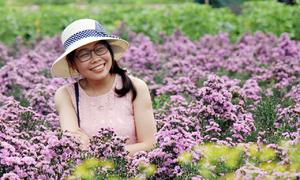 Thuê đất trồng hoa cho khách selfie kiếm tiền triệu mỗi ngày