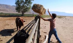 Sinh viên Mỹ cưỡi ngựa, chăn bò ở ngôi trường trên hoang mạc