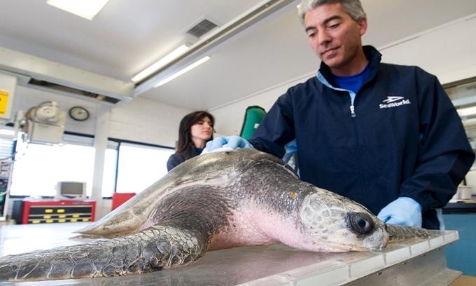Cách rác thải nhựa giết chết động vật biển