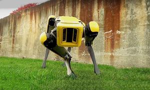 Chó robot SpotMini có thể leo cầu thang, tránh vật cản