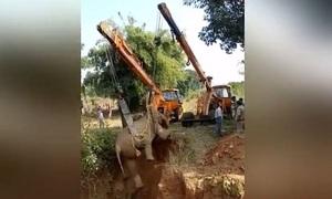 Hai cần cẩu giải cứu voi mắc kẹt dưới giếng sâu