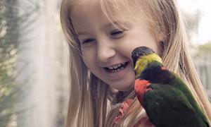 Trường mẫu giáo Mỹ cho trẻ đến sở thú mỗi ngày