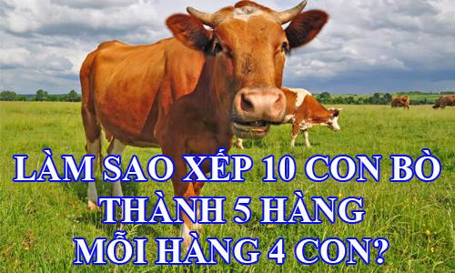 lam-sao-xep-10-con-bo-thanh-5-hang-moi-hang-4-con