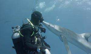 Thợ lặn giật nảy mình khi bị cá mập 'hôn'