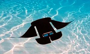 Robot có hình dáng và cách bơi giống hệt cá đuối