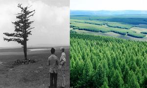 50 năm biến đất hoang thành cánh rừng trồng lớn nhất thế giới