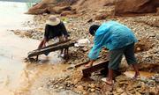 Dân Quảng Nam ra sông đào vàng sau lũ