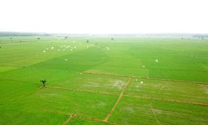 Nông dân Tiền Giang trồng lúa theo tiêu chuẩn GlobalGAP