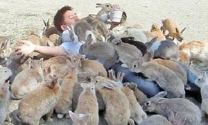 Thảm cảnh của đàn thỏ nghìn con trên hòn đảo Nhật