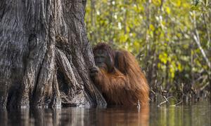 Những bức ảnh thiên nhiên ấn tượng nhất năm 2017