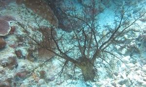 Hải sâm uốn xúc tu tóm mồi dưới đáy biển