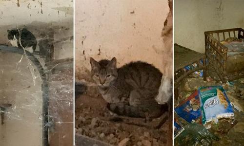 Giải cứu 70 con mèo sống trong căn nhà ngập rác