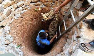 Bác sĩ thú ý trèo xuống giếng sâu 9 m cứu báo hoang