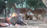 Đốt lửa sưởi ấm cho thú ở Hà Nội