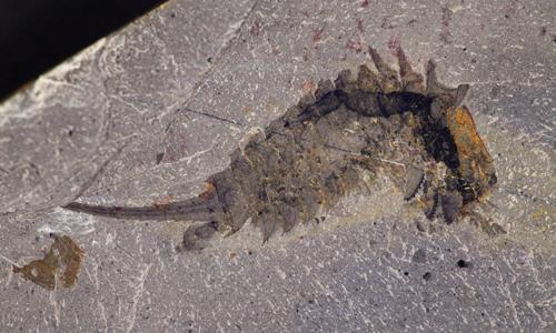 Quái vật biển cổ đại xé xác con mồi nhờ phần đầu sắc nhọn