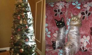 Bí kíp bảo vệ cây thông Noel trước chó mèo