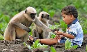 Tình bạn giữa đàn voọc hoang và 'cậu bé rừng xanh' Ấn Độ