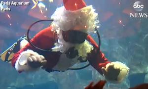 Ông già Noel bơi lội cùng cá trong công viên thủy cung tại Pháp
