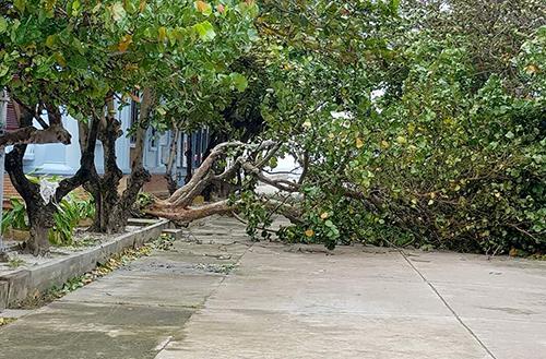 Cây xanh ở Trường Sa ngã đổ trong bão. Ảnh: Phương Chi
