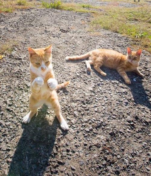 Võ sĩ mèo.