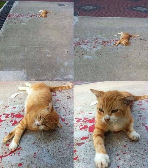 Chỗ ngủ của mèo khiến người qua đường hoảng hốt.