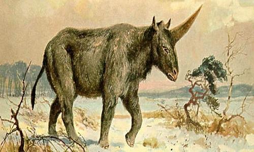 Kỳ lân Siberia chính thức tuyệt chủng cách đây 29.000 năm. Ảnh: Wikimedia.