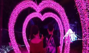 Thảo Cầm Viên Sài Gòn khoác áo mới với hệ thống LED tạo hình