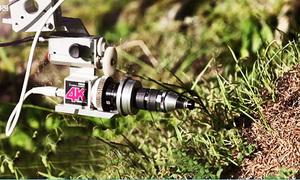 Thiết bị nghìn USD giúp ghi hình các sinh vật nhỏ như kiến