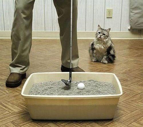 Một tác dụng khác của nhà vệ sinh dành cho mèo.