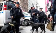New York cài chó nghiệp vụ, đội chống bắn tỉa bảo vệ giao thừa