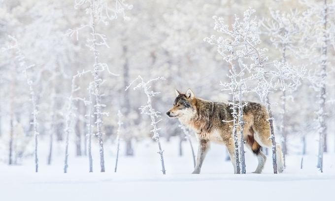 Bộ ảnh thiên nhiên đẹp nhất tháng 12