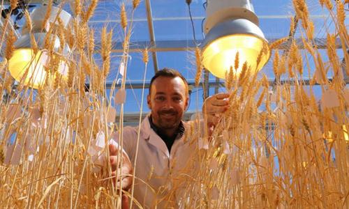 Cây trồng phát triển nhanh trong nhà kính nhờ phương pháp mới. Ảnh: New Atlas.