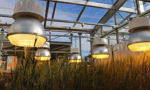 Hệ thống đèn giúp cây trồng sinh trưởng nhanh và cho năng suất cao. Ảnh: New Atlas.
