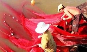 Thả lưới theo con nước bắt cá trên sông ở Vũng Tàu
