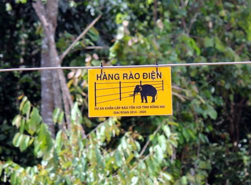 Hàng rào điện được lắp đặt nhằm ngăn chặn voi và người xung đột. Ảnh: Phước Tuấn